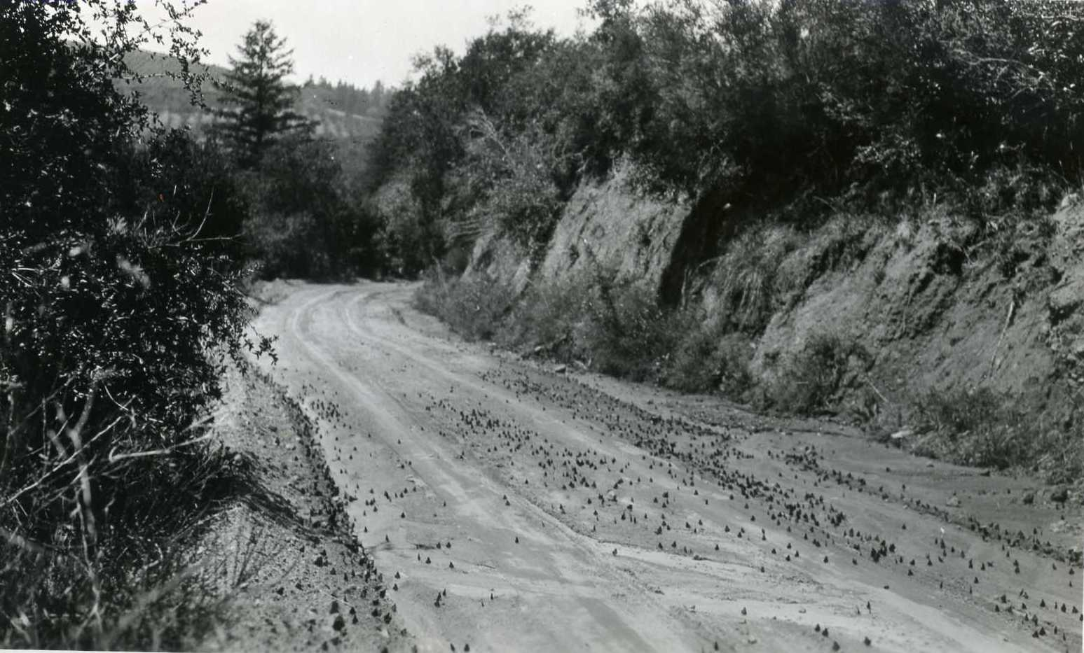 1930 Road to Camp Loma